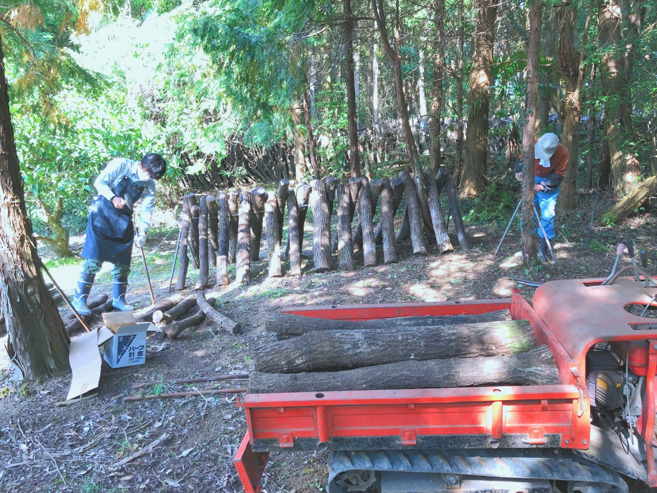 椎茸の原木栽培を始めたが、想像を超える重労働だった話。