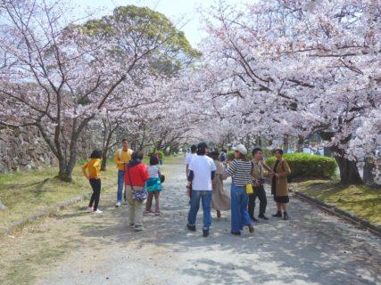 サクラサク 福岡・大濠公園 RX100で撮影